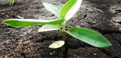 缓解土壤板结!液体水溶肥为什么会成为未来发展方向